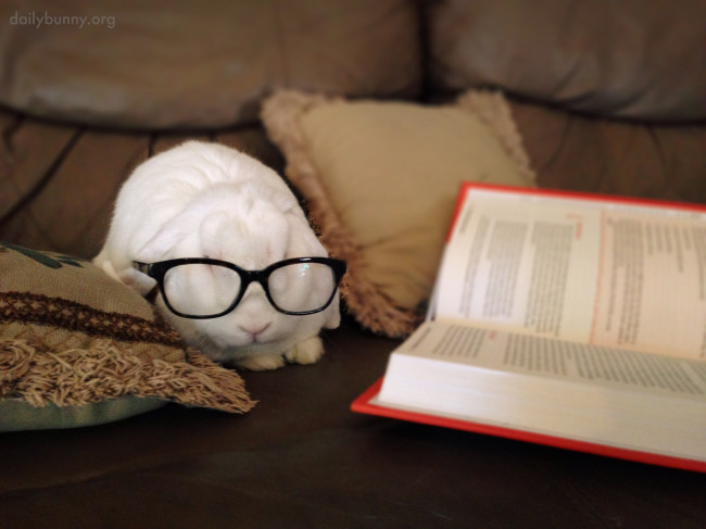 Bunny-Is-Clearly-an-Intellectual