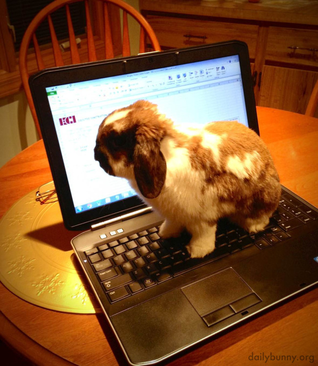 This one is a virtual school bunny, no doubt.