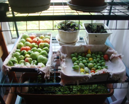 Tomatoes - and herbs.