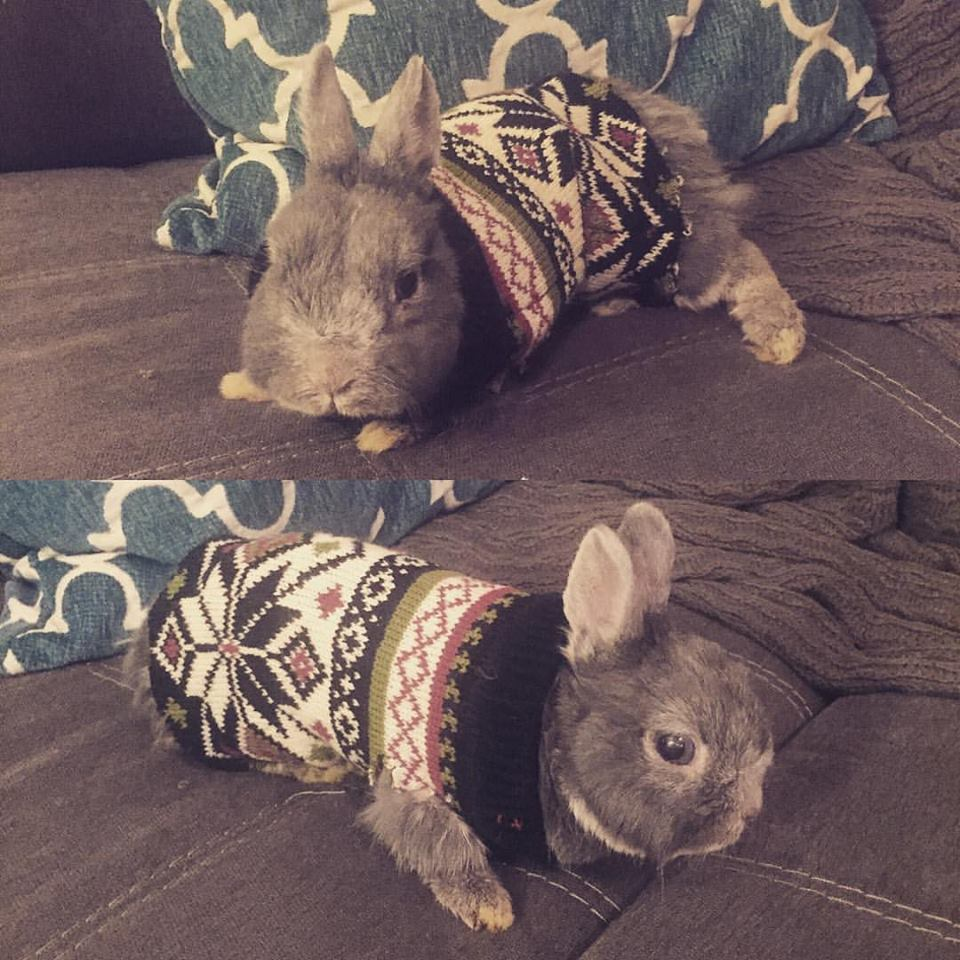 A Rabbit in a Sweater